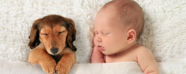 Брошенную новорожденную девочку случайно нашла собака