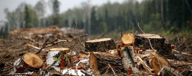Мэрия Омска говорит о том, что вырубки деревьев в парке не было